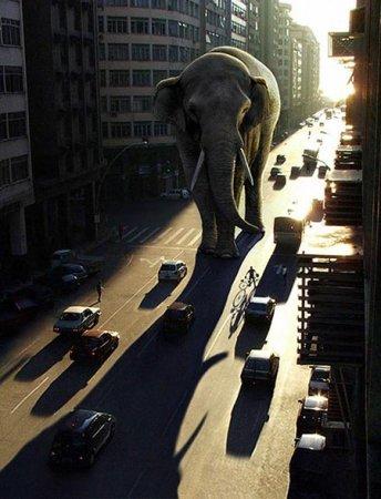 Слон в городе
